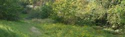 Grünflächen Nippes